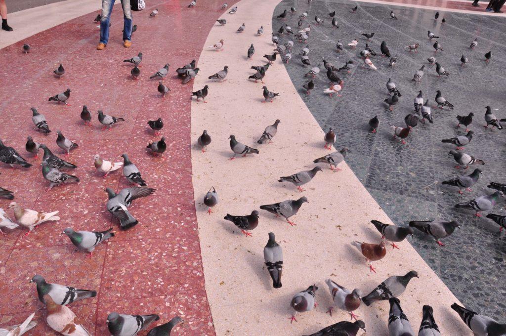 PLACA CATALUNYA birds